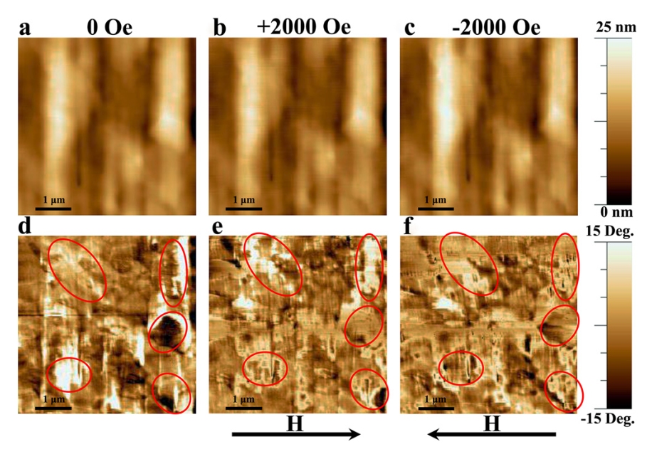 Multiferroic response from PFM
